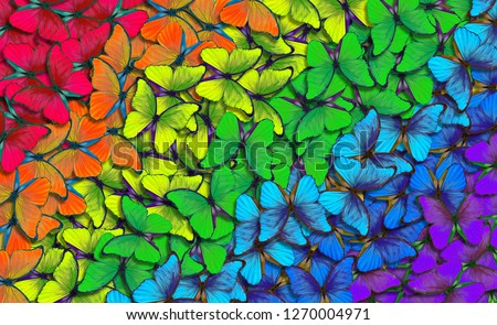 Colors of rainbow. Pattern of multicolored butterflies morpho, texture background. multicolored natural abstract pattern #1270004971