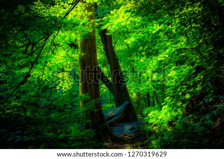 Forest, trail, natural area, #1270319629