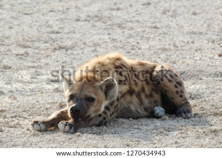 Traveling through the Namibian desert  #1270434943