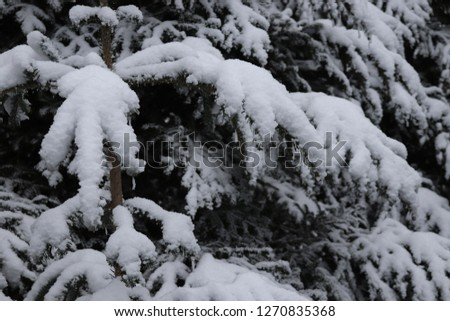 Snow covered lovely Pine Tree #1270835368