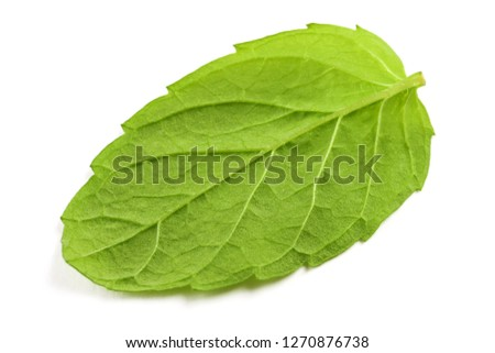 One fresh mint leaf isolated on the white surface #1270876738