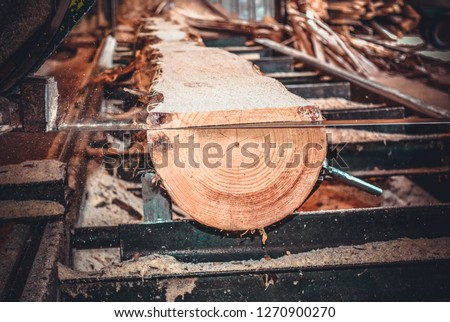 Sawmill. Process of machining logs in equipment sawmill machine saw saws the tree trunk on the plank boards. Wood sawdust work sawing timber wood wooden woodworking #1270900270