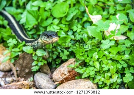 green garter snake in the grass #1271093812