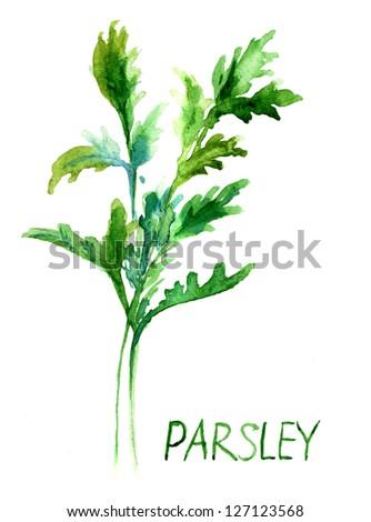 Parsley, watercolor illustration #127123568