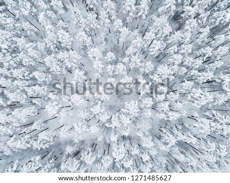 Aerial view of a winter snow-covered pine forest. Winter forest texture. Aerial view. Aerial drone view of a winter landscape. Snow covered forest. Aerial photography #1271485627