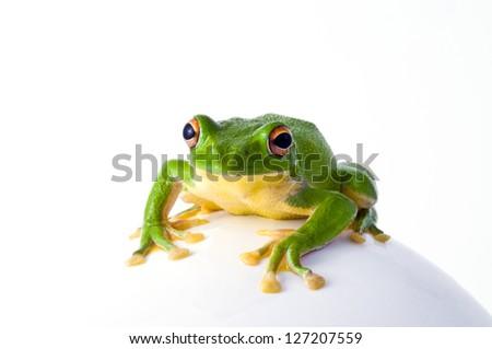 frog, #127207559