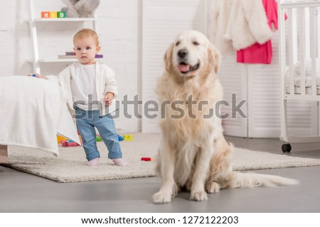 adorable kid and cute golden retriever in children room #1272122203