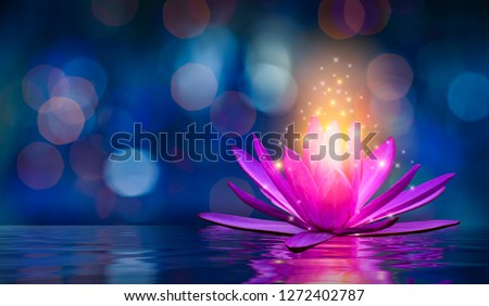 lotus Pink light purple floating light sparkle purple background #1272402787