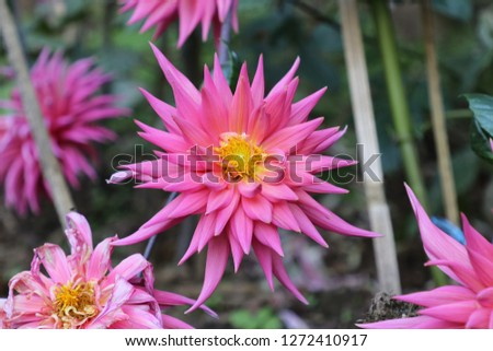 Pink flowers, yellow, beautiful green Background #1272410917