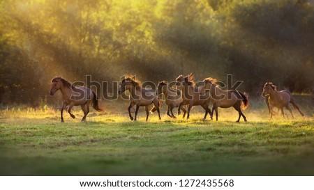 Horse herd run in sunlightwith dust at summer pasture #1272435568