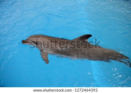 action with dolphin #1272464392