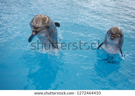 action with dolphin #1272464410