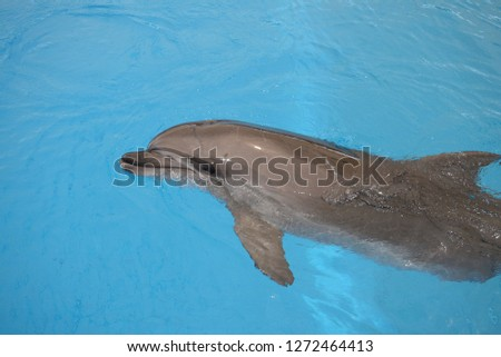 action with dolphin #1272464413