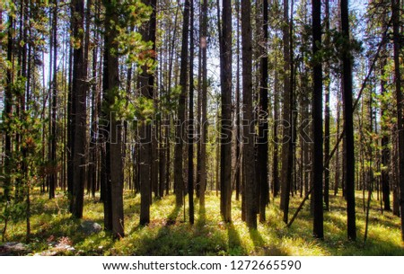 A forest on a hiking trail in Lewis & Clark National Park, Montana. #1272665590
