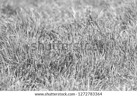 Grass texture or background. Green grass texture from field. Meadow with fresh green plants or herbs. Texture concept. #1272783364