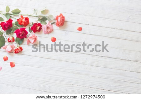 roses on white wooden background #1272974500