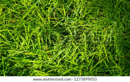 Texture, background, pattern, grass on the lawn, green saturated color. motley grass #1273899055
