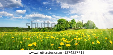 Field with dandelions and blue sky #1274227915