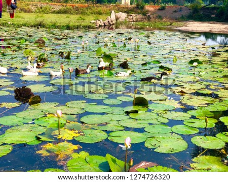 pond nature lilly #1274726320