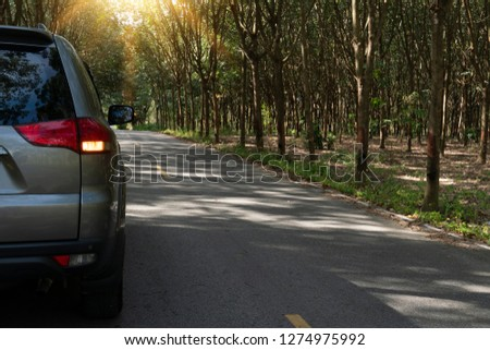 Car gray color for families on the road open turn light. Trip travel to nature. On the road made of asphalt. The two sides are full of rubber trees. With a light shining from the top of the forest. #1274975992