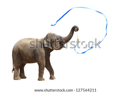 Elephant playing isolated against white background. With Clipping path