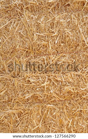 bunches of hay under sunny #127566290