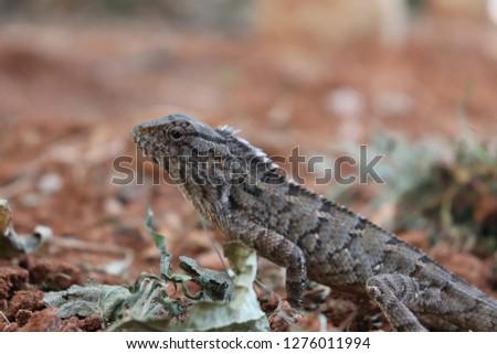 Lizard #1276011994