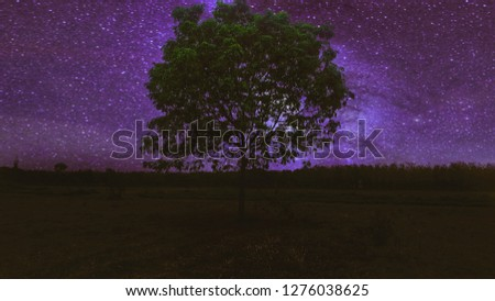 Shadow the trees in the field at night that the stars are full of stars. Decorate images with applications. #1276038625