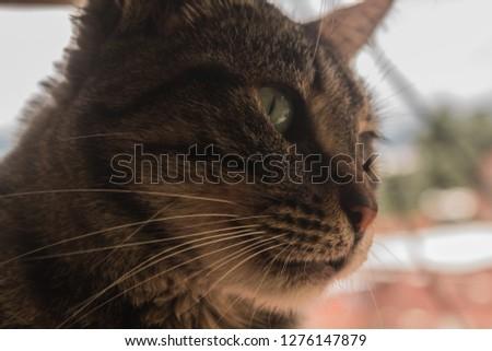 beautiful portrait of a cat #1276147879