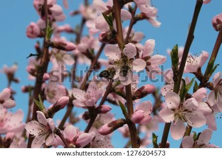 spring awakening of nature #1276204573