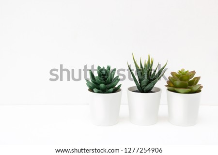 White background for card for women's or mother's day. White gift boxes and succulent. Love. Valentines day. #1277254906