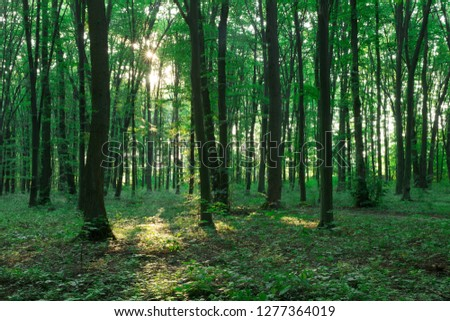 Forest trees. nature green wood sunlight backgrounds #1277364019