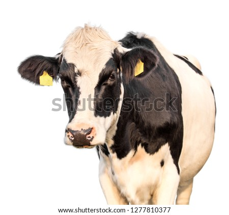 cow on a white background #1277810377