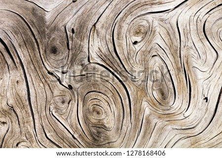 Old weathered wood background texture with swirl pattern #1278168406