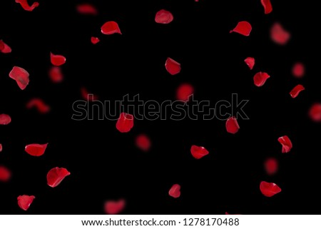 Background with red rose petals. Falling red flower petals and pink. Happy Valentines day card. Valentine's day background. Set of Naturalistic Rose Petals on black background #1278170488