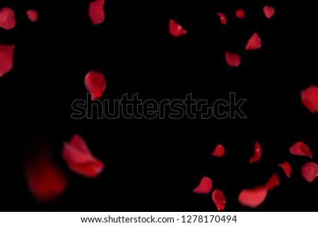 Background with red rose petals. Falling red flower petals and pink. Happy Valentines day card. Valentine's day background. Set of Naturalistic Rose Petals on black background #1278170494