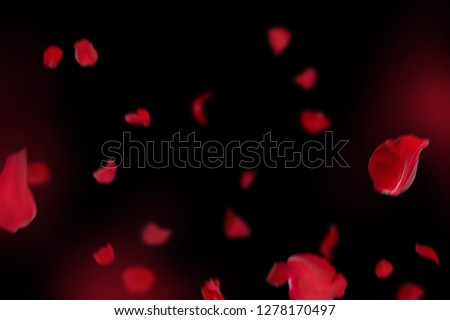 Background with red rose petals. Falling red flower petals and pink. Happy Valentines day card. Valentine's day background. Set of Naturalistic Rose Petals on black background #1278170497