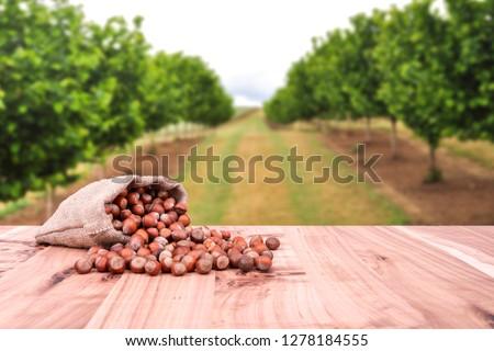 Hazelnuts, filbert in jute burlap sack bag on wooden table. Backdrop is hazelnut trees. #1278184555