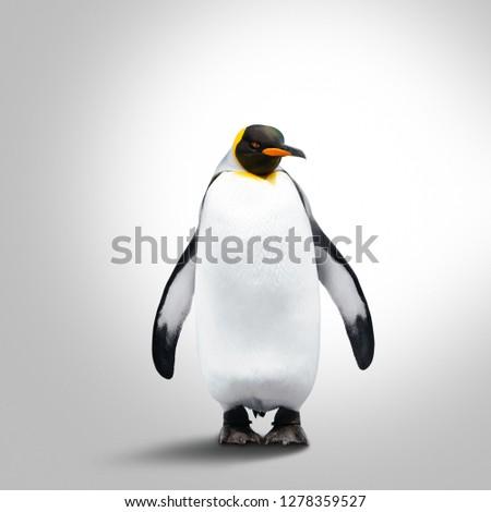 Emperor Penguin Isolated On Gray Background. Penguin Looks Forward
