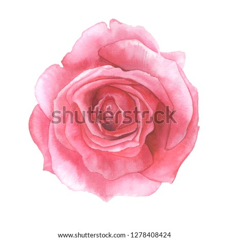Beautifull pink rose painted in watercolor. Floral element on white background for invitations, cards and patterns. #1278408424