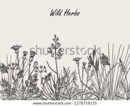 Floral background with hand drawn wild flowers, herbs and grasses. Vintage botanical vector illustration #1278718135