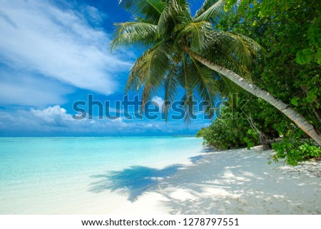 tropical Maldives island with white sandy beach and sea #1278797551