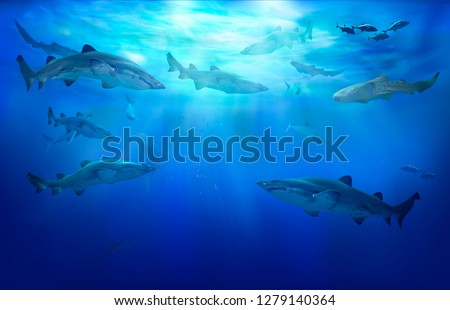 Sharks in the tropical sea.