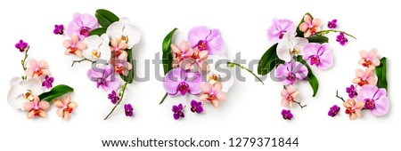 Orchid flowers and leaves collection isolated on white background. Flower arrangement. Floral design. Top view, flat lay #1279371844