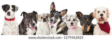 Row of dogs of different breeds together over white background #1279462825