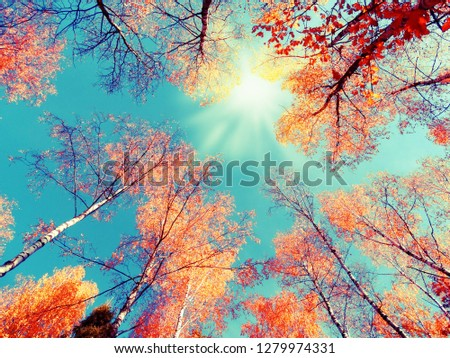 autumn forest landscape on a sunny day with oak leaves background #1279974331