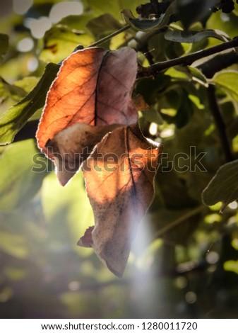 autumn leaves on the tree #1280011720