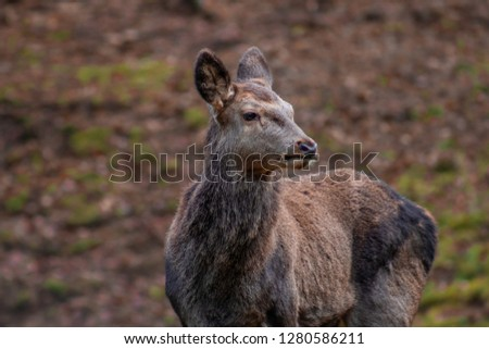 Deer in the black forest in germany #1280586211