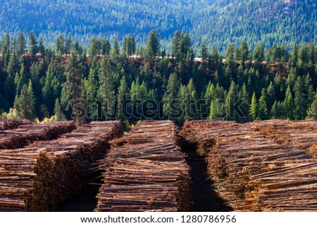 Wood timber logs in a pile at a sawmill in Midway, British Columbia, Canada. The lumber logging industry is a very important business for the economy of British Columbia.  #1280786956