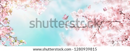 Spring banner, branches of blossoming cherry against background of blue sky and butterflies on nature outdoors. Pink sakura flowers, dreamy romantic image spring, landscape panorama, copy space. #1280939815